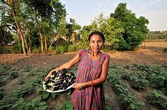 nepal-farmer-aubergines-ccafs